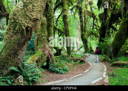 Hoh Rainforest - Olympic National Park, près de Forks, Washington, USA Banque D'Images