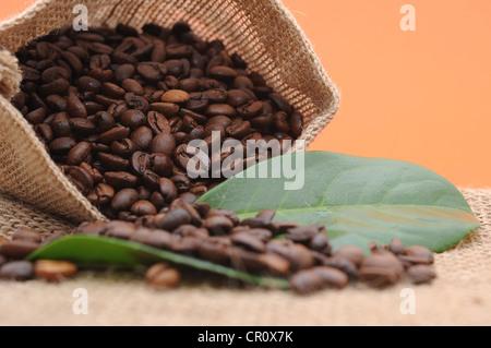 Grains de café dans un sac de jute Banque D'Images