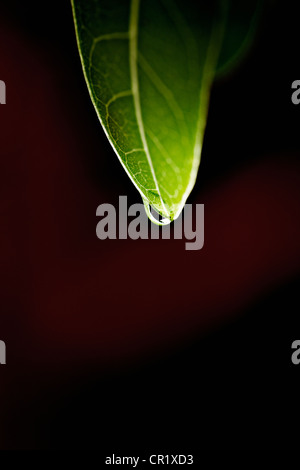 Close up de goutte d'eau on leaf Banque D'Images