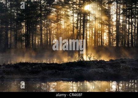 Tôt le matin, l'aube, dans le marais, dalarna, Suède, Scandinavie, Europe Banque D'Images