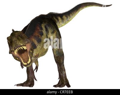 Illustration d'un Tyrannosaurus (espèces de dinosaures) isolé sur fond blanc