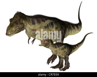 Illustration d'un adulte et un jeune Tyrannosaurus (espèces de dinosaures) isolé sur fond blanc
