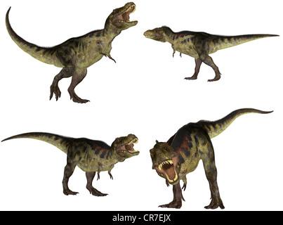 Illustration d'un pack de quatre (4) Tyrannosaurus avec différentes poses isolé sur fond blanc