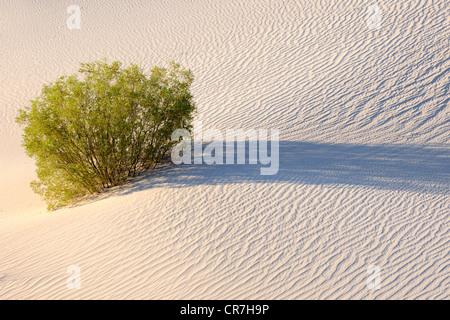 Mesquite Flat Dunes au lever du soleil, la Death Valley National Park, California, USA
