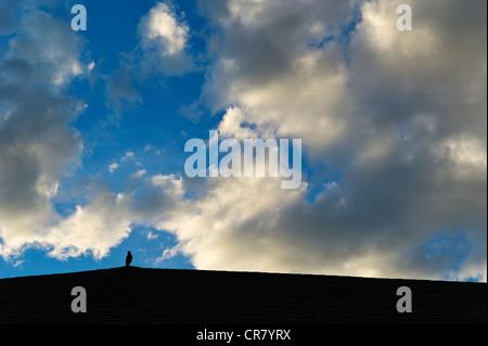 La silhouette Blackbird sur toit contre puffy white coucher soleil nuages et un ciel bleu clair Banque D'Images