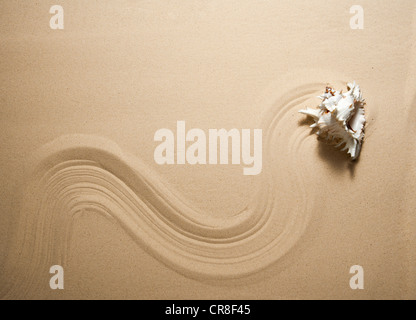 Sea shell en ligne ondulée sur le sable Banque D'Images