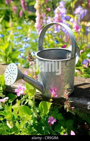 Petit arrosoir en métal jardin Banque D'Images