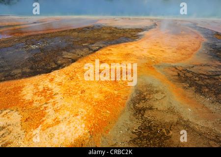 Sortie de l'Excelsior Geyser dans la rivière Firehole, Midway Geyser Basin, coloré de bactéries thermophiles, des Banque D'Images