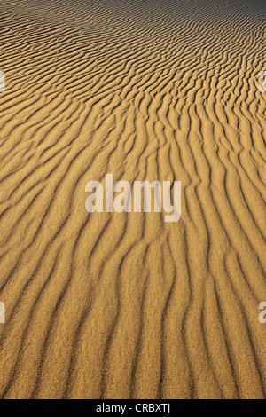Marques d'ondulation dans les sables de la télévision Mesquite Sand Dunes, early morning light, Stovepipe Wells, Death Valley National Park
