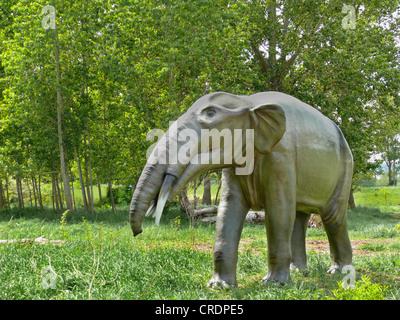 Gomphotherium (Gomphotherium), l'éléphant disparu primitiv