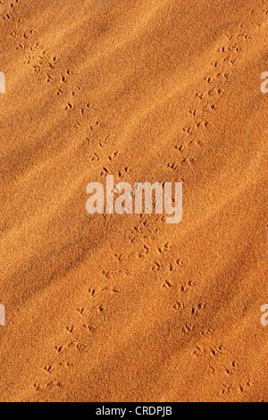 Croisement des pistes d'animaux sur le sable dans le désert du Namib, Namibie, Afrique Banque D'Images