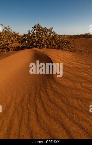 Dunes de sable dans le parc national de Sarigua (désert), Herrera province, République du Panama. Banque D'Images