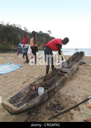 Nettoyage du bateau de son homme fait d'un mango-évidé, arbres en arrière-plan de la mer des Caraïbes, Haïti, Grande Banque D'Images