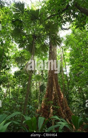 Forêt tropicale, parc national de Corcovado, péninsule d'Osa, au Costa Rica. Mars 2012. Banque D'Images
