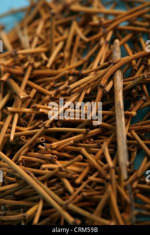 L'éphèdre a été utilisée en médecine traditionnelle chinoise pour 5 000 ans pour traiter l'asthme, la fièvre de Banque D'Images