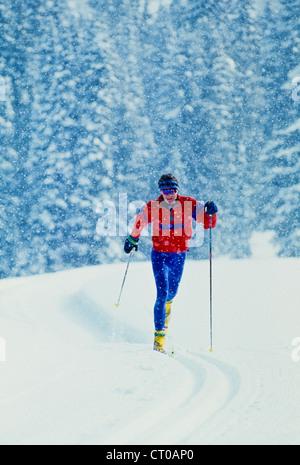 La fondeuse mâle dans une tempête de neige. Banque D'Images