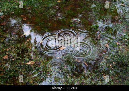 Gouttes de pluie tombant dans la flaque park Banque D'Images