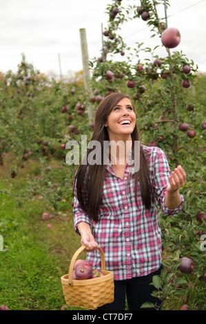 Jeune femme en verger, jetant en l'air apple Banque D'Images