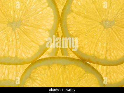 Citrus limon, le Citron Banque D'Images
