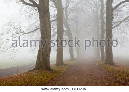 Les Pays-Bas, 's-Graveland, domaine Hilverbeek. Couleurs d'automne. Banque D'Images