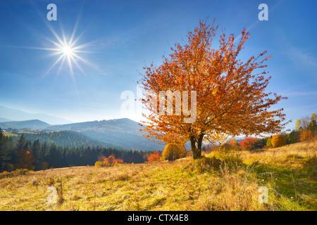 Scène d'automne dans les montagnes Beskides, Pologne Banque D'Images