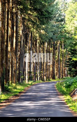 Route en forêt, Puy de Dome, Auvergne, massif Central, France