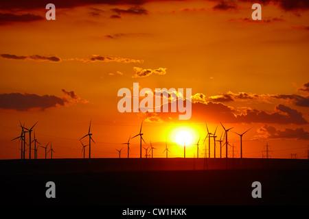 Ferme éolienne au coucher du soleil dans la région de Dobrogea de Roumanie. Banque D'Images