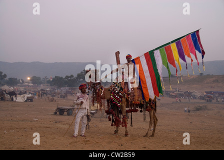 Chameau décorées à la foire de Pushkar Camel Festival culturel et dans le Rajasthan en Inde. Cet évènement se passe Banque D'Images