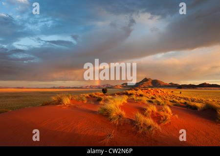 Paysage au coucher du soleil montrant l'écologie unique du sud-ouest du désert du Namib ou pro -le Namib. NamibRand Nature Reserve, Namibie