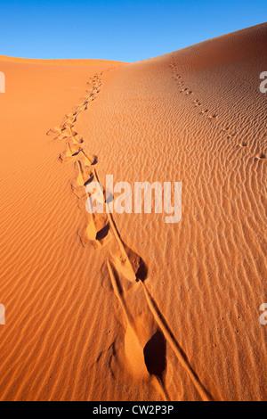 Les pistes en sable rouge. Sossusvlei dans le désert du Namib. Namib-Naukluft National Park La Namibie Banque D'Images