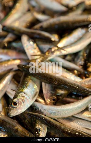 Les sardines, marché Ballaro, Palerme, Sicile, Italie Banque D'Images