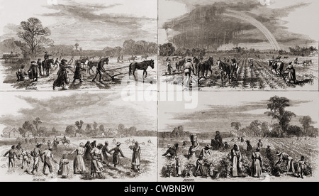 Après la guerre civile de nombreux Américains africains a continué à travailler sur les plantations où ils avaient Banque D'Images