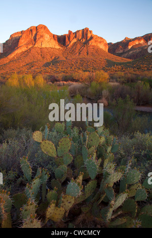La rivière Salt, Tonto National Forest, à l'Est de Phoenix, Arizona. Banque D'Images