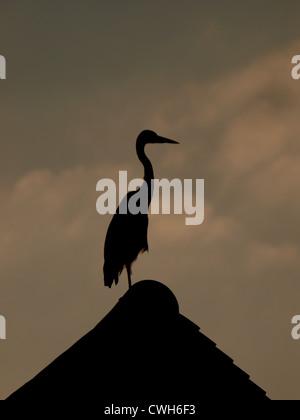 Silhouette d'un héron debout sur un toit de maison, UK Banque D'Images