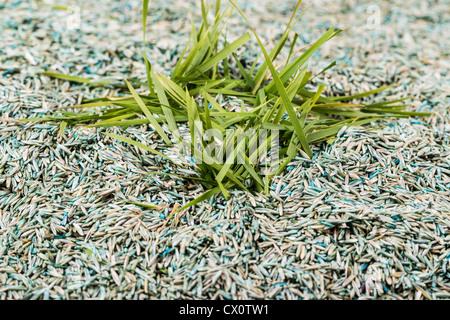 Nouvelle herbe verte à partir de la pile de l'herbe Banque D'Images