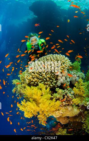 Mer Rouge, sous-marin, les récifs coralliens, sea life, la vie marine, de l'océan, la plongée, les vacances, l'eau, Banque D'Images