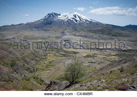 Mont Saint Helens, Monument Volcanique National Skamania County, Washington Banque D'Images