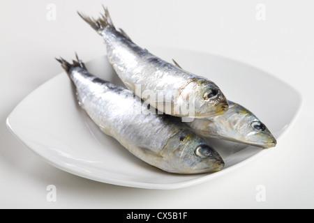 Sardines crues sur la plaque Banque D'Images