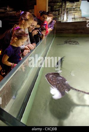 Les familles et les enfants à la recherche à la pêche dans le Sea Life London Aquarium, South Bank, Londres UK Banque D'Images