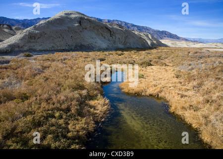 Salt Creek, Death Valley National Park, California, États-Unis d'Amérique, Amérique du Nord