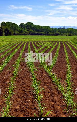Les terres cultivées dans un paysage rural dans une journée ensoleillée Banque D'Images