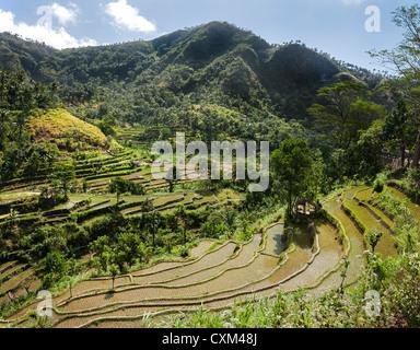 Les rizières en terrasses près de Tirtagangga , l'Est de Bali, Indonésie. Banque D'Images
