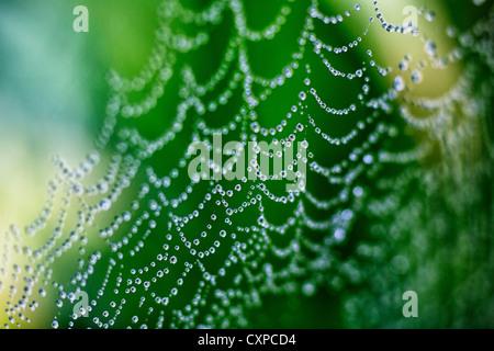Close up of a spider's web couvert de gouttes de pluie dans le Worcestershire, Royaume-Uni Banque D'Images