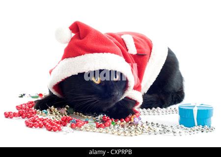 Chat habillé en vêtements de Noël Banque D\u0027Images, Photo