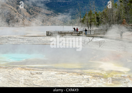 Sentier de promenade, ressorts, terrasse principale, Mammoth Hot Springs, Parc National de Yellowstone, Wyoming, Banque D'Images