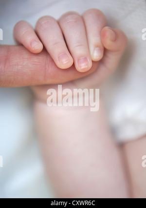 La holding parents collés