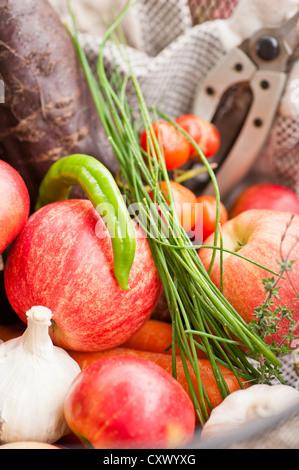 La récolte d'un jardin, fruits et légumes mixtes Banque D'Images