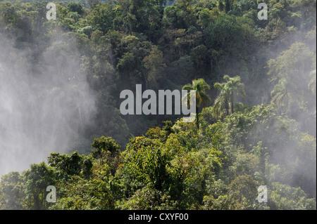 Couvrant de pulvérisation la forêt tropicale, chutes d'Iguacu Falls ou au patrimoine mondial de l'UNESCO, à la frontière Banque D'Images