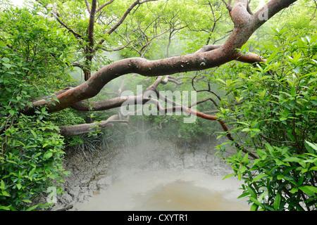 Boue chaude springs, Parc National de Rincon de la Vieja, Guanacaste, Costa Rica, Amérique du Sud Banque D'Images