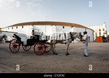 Cheval andalou blanc et noir chariot avec roues rouges et conducteur à l'avant de la corrida en anneau, Espagne